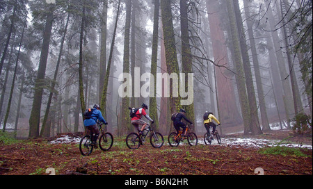 mountain bikers on Bear Creek Trail, Camp Nelson, California - Stock Image