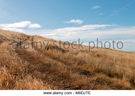 Country road leading to the top of a hill, Canterbury, New Zealand - Stock Image