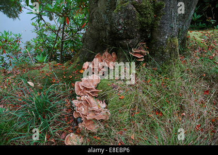 Fungus growing near tree and water - Stock Image