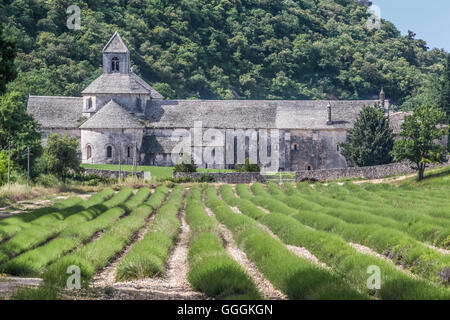 geography / travel, France, Provence, Senanque, Provence-Alpes-Cote d'Azur, Gordes, Additional-Rights-Clearance - Stock Image