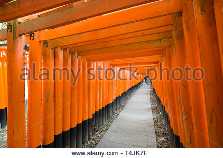 Woman walking beneath the Senbon Torii painted with a vermilion red-orange color that is associated with the soul of Inari Okami and blessings for lif - Stock Image