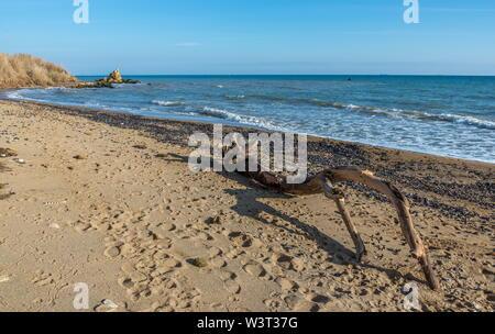 Big snag on the beach on a warm sunny autumn day in Odessa, Ukraine - Stock Image