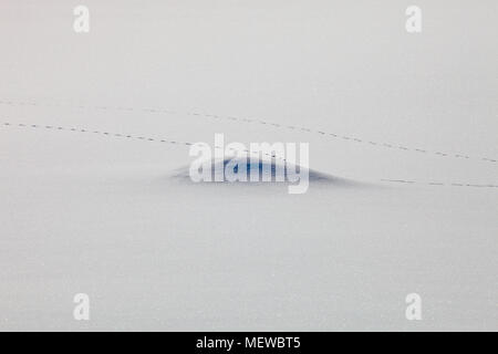 Fox tracks are leading over a snow covered lake on a sunny winter day - Stock Image
