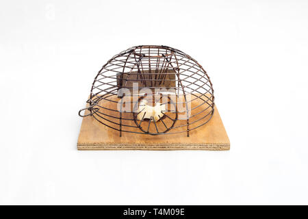 Mouse trap in white isolated background. - Stock Image