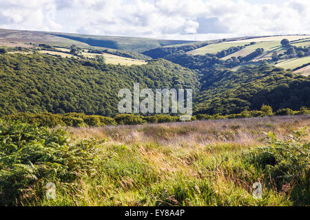 Looking over Horner Wood on Exmoor from Ley Hill - Stock Image