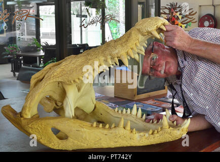 Tourist opening skull of crocodile in the Territory Wildlife Park, Cox Peninsula Rd, Berry Springs Darwin NT 0838, Australia - Stock Image
