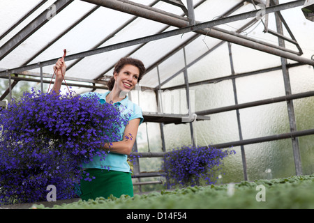 young woman working in greenhouse - Stock Image