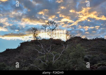 Trees at the top of a ridge silhouetted against the glowing sky at sunrise - Stock Image