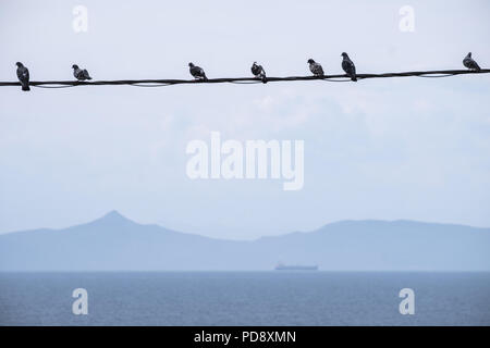 Pigeons sat in a row on a power line over the Aegean sea with the Sardonic Islands in the background and ferry sailing. East Attica, Greece, Europe. - Stock Image
