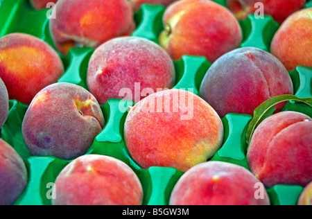 Peaches fruit produce soft juicy tree fruit yellow flesh, downy, red-tinted yellow skin, and a deeply sculptured - Stock Image