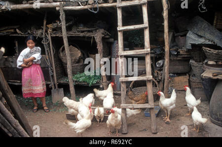 Northern China 1980 Commune in Waoning Province young girl amongst the chickens holding a big rabbit - Stock Image
