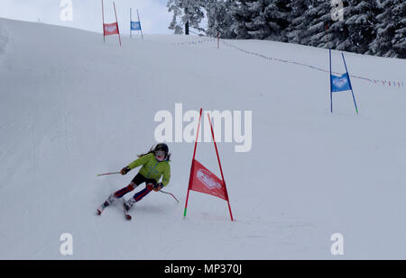 Young girl skier speeds down the giant slalom course during training session. Golte mountain, Slovenia. - Stock Image