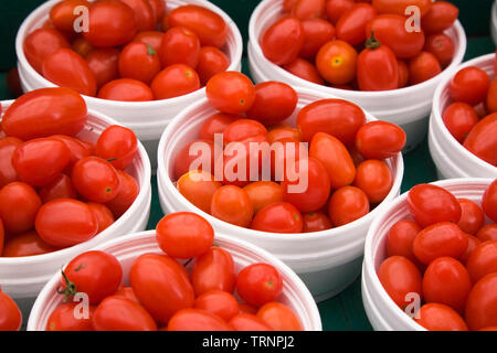 Freshly picked red raisin tomatoes - Solanum lycopersicum for sale in white styrofoam containers - Stock Image