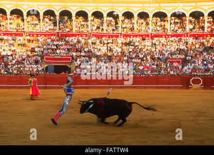 Banderilleros with bull at Maestranza Bullring in Seville (Sevilla), Spain - Stock Image