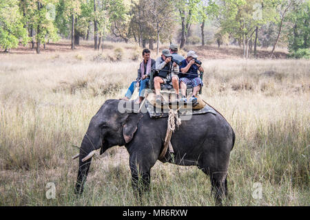 Mahout and tourists taking photographs on an Asian, or Indian Elephant, Bandhavgarh National Park, Tala, Madhya Pradesh, India - Stock Image