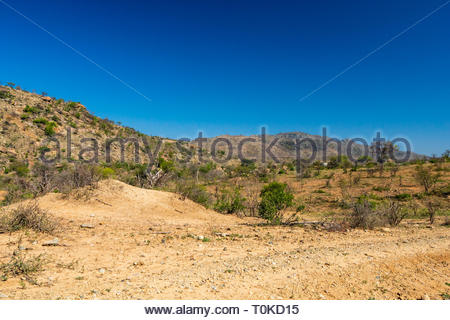 African bush during a drought - Stock Image