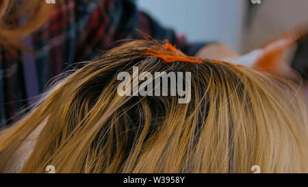 Process of coloring hair of woman client at studio - Stock Image