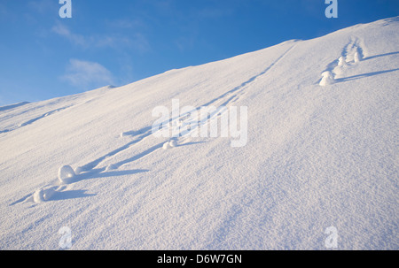 Snowballs rolling down at steep hill - Stock Image