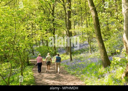 Three women walking a dog through Houghall woods, Durham City, Co. Durham, England, UK - Stock Image