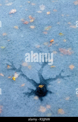 fallen autumn leaves on ice patterns in frozen pool / pond / lake with tree shaped cracked ice surface with thousands of tiny ice bubbles - Stock Image