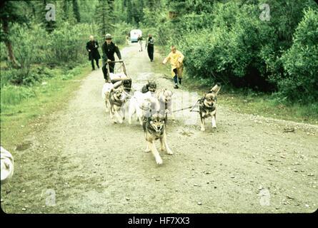 Dogs pulling sledge on gravel road; McKinley National Park, Alaska. - Stock Image