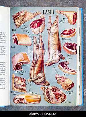 Illustrated Lamb Page from Mrs Beetons Everyday Cookery Book - Stock Image