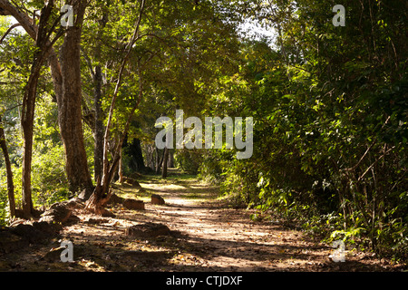 Dappled sunlight on shady forest walk, early morning on the walls of Angkor Thom near Victory Gate, Angkor, Siem - Stock Image
