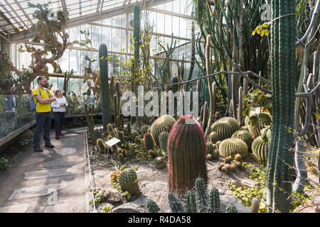 Cactus cacti house, view inside Poznan Palm House containing Europe's largest cactus collection, Poznan, Poland. - Stock Image