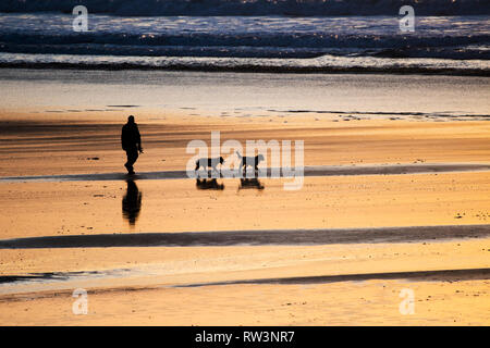 A man and his two dogs seen in silhouette walking across Fistral Bech at sunset in Newquay Cornwall. - Stock Image