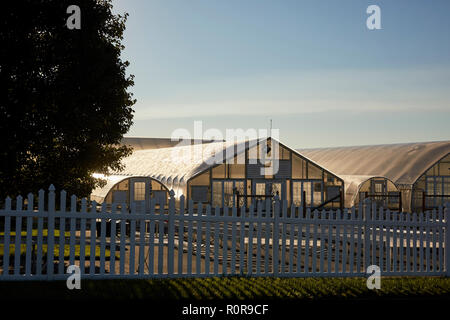 the greenhouses at Hoover's Farm Market, Amish Country, Lancaster County, Pennsylvania, USA - Stock Image