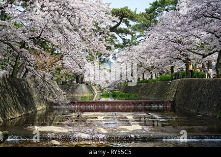 Japan, Honshu island, Kansai, Osaka, cherry blossoms - Stock Image