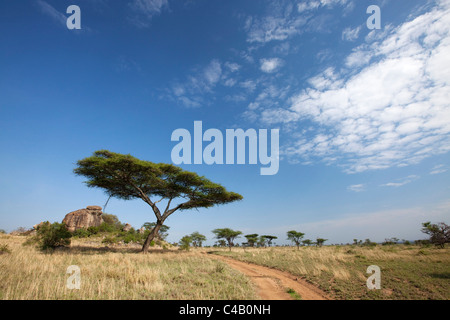 Tanzania, Serengeti. Typical Serengeti landscape near the Maasai Kopjes. - Stock Image
