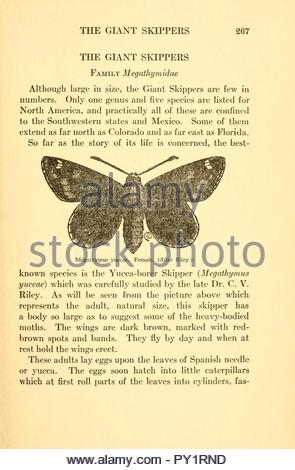 Butterflies worth knowing - Stock Image