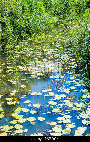 The River Combe Haven in East Sussex - a home to wildlife - Stock Image