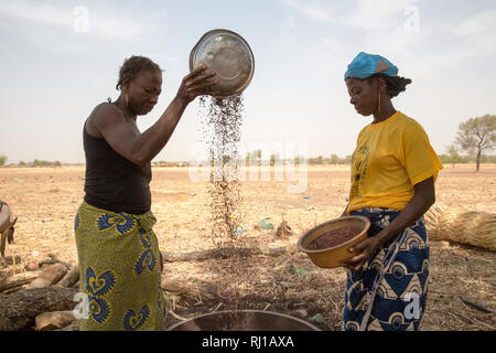 Kourono village,Yako province, Burkina Faso. left, Minata Guiguemde, 37, with 5 children, and Kadissa Seogo, 30 with 2 children, winnowing sorghum. Kadissa benefitted from the goat project. - Stock Image