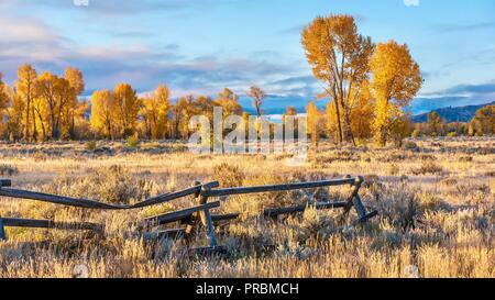 An autumn landscape scene in Jackson Hole, Wyoming, including an old style buck and rail wooden ranch fence and colorful aspen trees in early morning - Stock Image