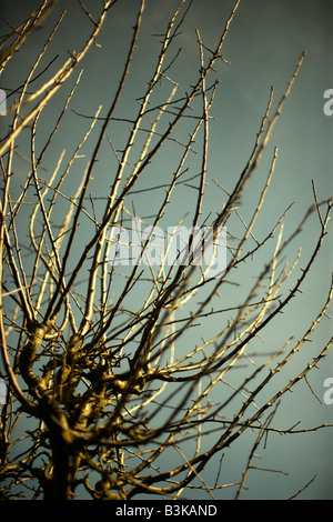 Branches in spring Apple tree - Stock Image