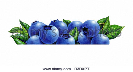 Blueberries Cropped - Stock Image