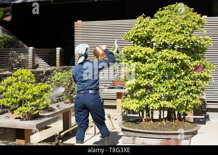 A gardener watering the bonsai at Portland Japanese Garden in Portland, Oregon, USA. - Stock Image
