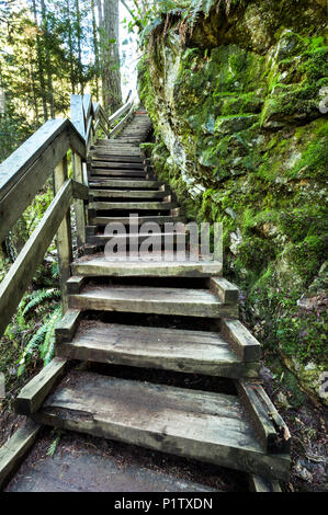 Wooden steps leading up through the forest in Lynn Valley Canyon, North Vancouver; Vancouver, British Columbia, Canada - Stock Image