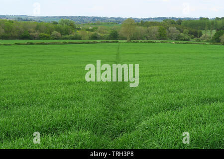 A clearly marked footpath leads across a field near the north Oxfordshire village of Hook Norton - Stock Image