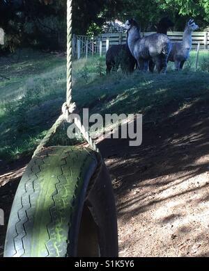 Tyre swing - Stock Image
