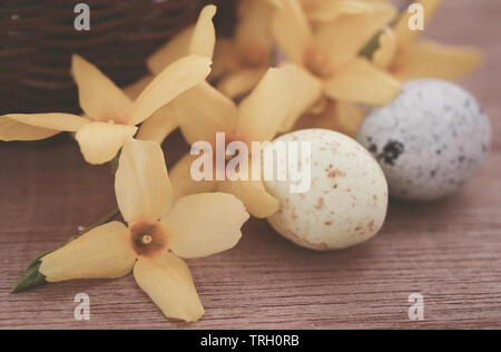Easter egg with spring flower forsythia on textured surface - Stock Image