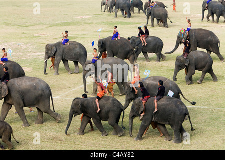 Thailand, Surin, Surin.  A herd of young elephants is ridden by Suai children during the annual Elephant Roundup - Stock Image