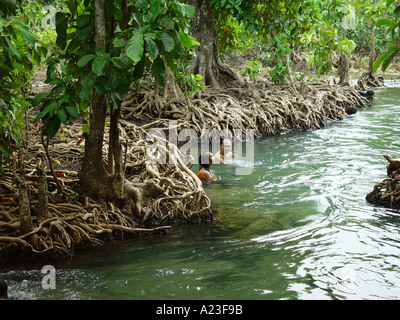 People in freshwater swimming along Eugenia trees in Thailand - Stock Image
