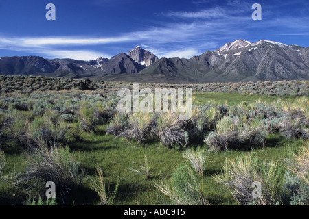 Mount Morrison and the Sherwin Range tower over sagebrush in the Eastern Sierra Nevada, Inyo National Forest, California, USA - Stock Image