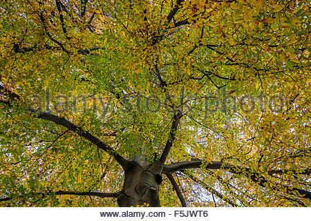 autumn, fall - Stock Image