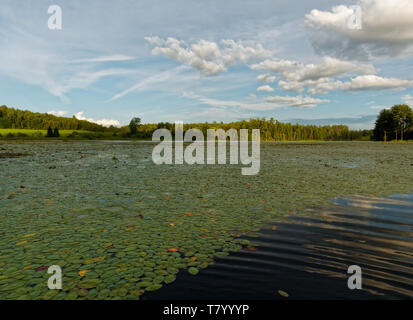 Quebec,Canada. Lily pad covered lake - Stock Image