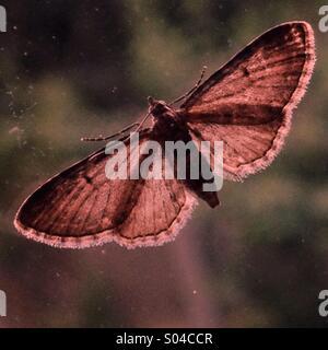 Moth through a Window - Stock Image