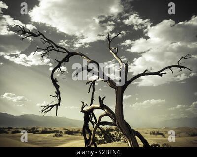 Dead wood tree un Death Valley, California, USA - Stock Image